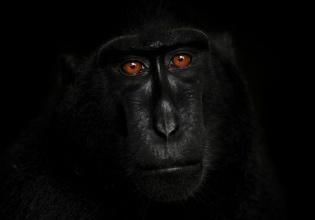 Wild, Life, Photography, exposición, fotografía, animales, sede, com